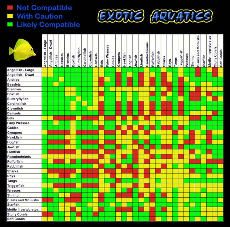 14 best saltwater tank images on pinterest marine for Saltwater fish compatibility chart