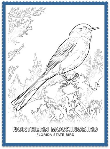 85 best Florida images on Pinterest Coloring books, Coloring pages - copy coloring pages birds in winter