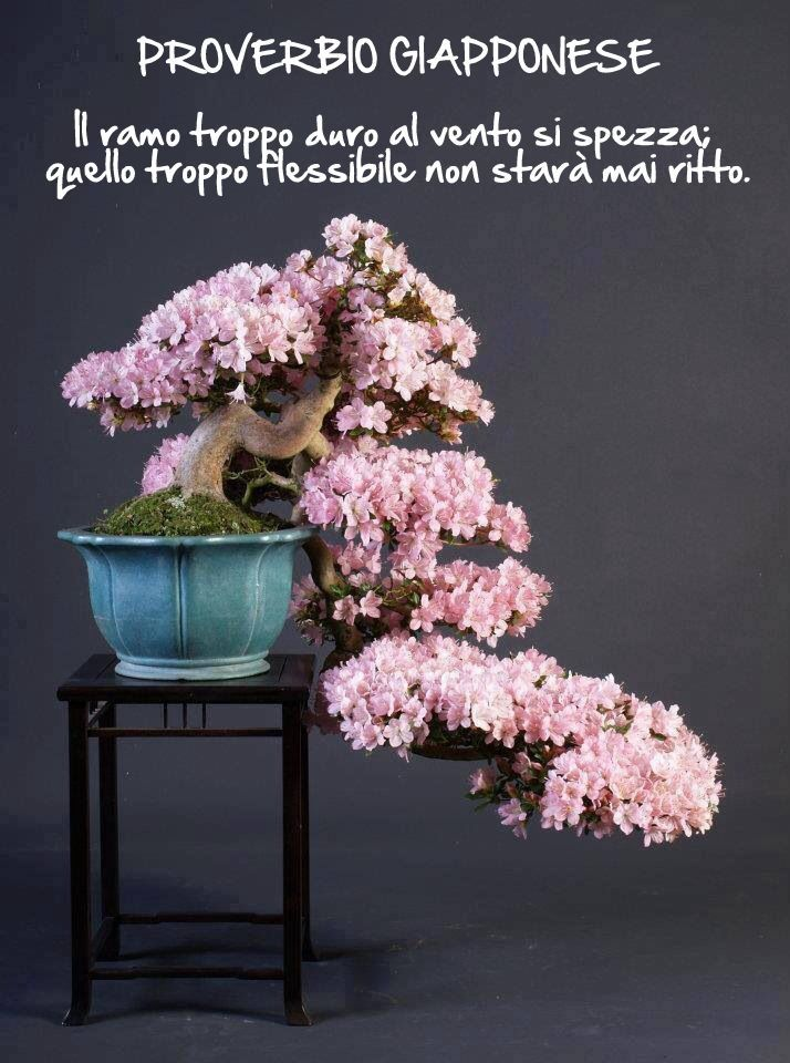 Bonsai. Proverbio Giapponese.
