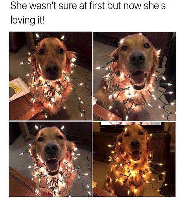 Animal Memes That Will Definitely Make You Smile - 29