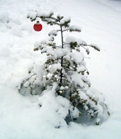 """Charlie Brown's Christmas Tree!! -- """"And suddenly, there was with the Angel, a multitude of the Heavenly Host, praising God, and saying, 'Glory to God in the highest, and on Earth, peace, good will toward men.' """"  And that's what Christmas is all about, Charlie Brown. <3<3<3"""