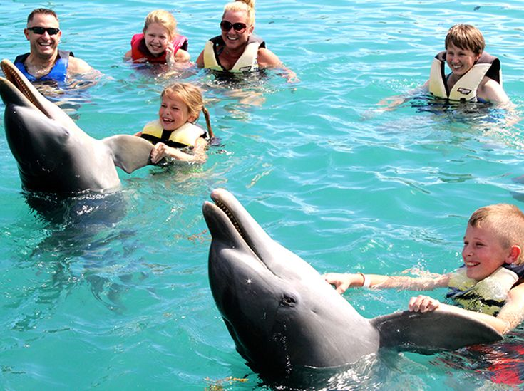 Dolphin Encounters offers animal programs for encountering sea lions and swimming with dolphins in the Bahamas. Learn more about where to swim with dolphins and kiss sea lions.