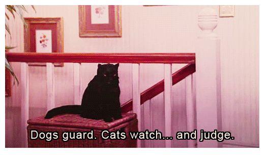 judgmental cats