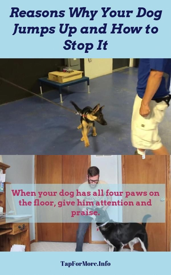 Stop Dog Jumping And How To Teach Your Dog To Shake Check The