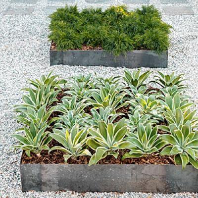 how to design a low water zen garden