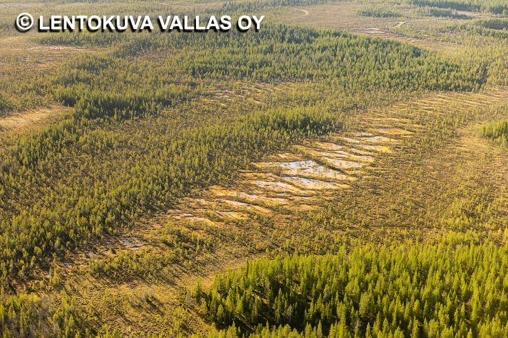 Syksyinen suomaisema, Kaukonen Ilmakuva: Lentokuva Vallas Oy