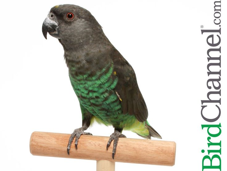 754 Best Images About Avian Stuff On Pinterest Toys