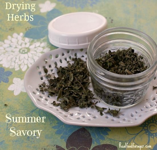 Post image for Drying Herbs: Summer Savory