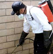 Pest Control Services in Philippines