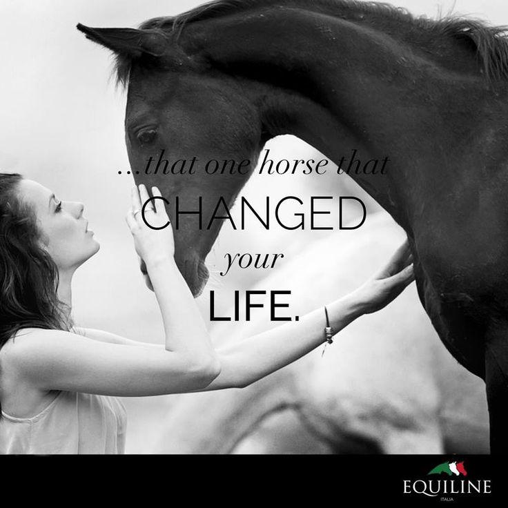 ...that one horse that changed your life. #equiline #horse #quote