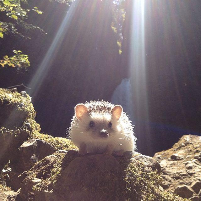 biddy-hedgehog_01.jpg