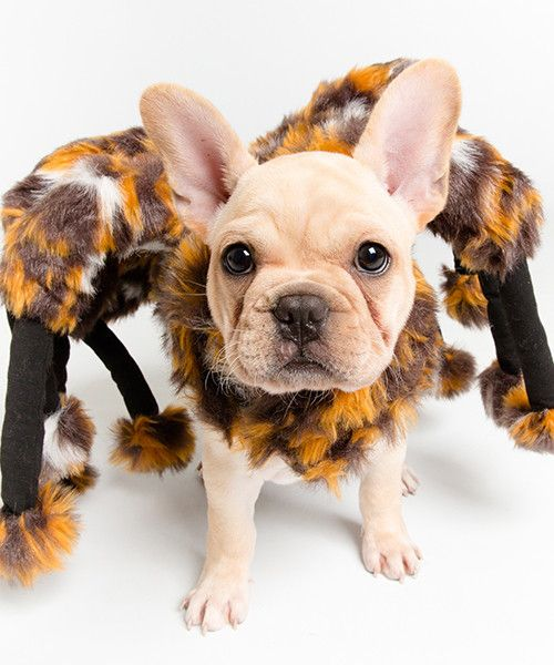 Scary Spider Costume for Dogs