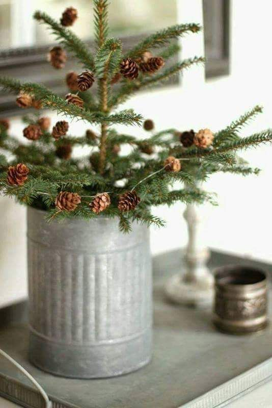 Love the skinny pines....i need to get one again and see how long I can keep it alive