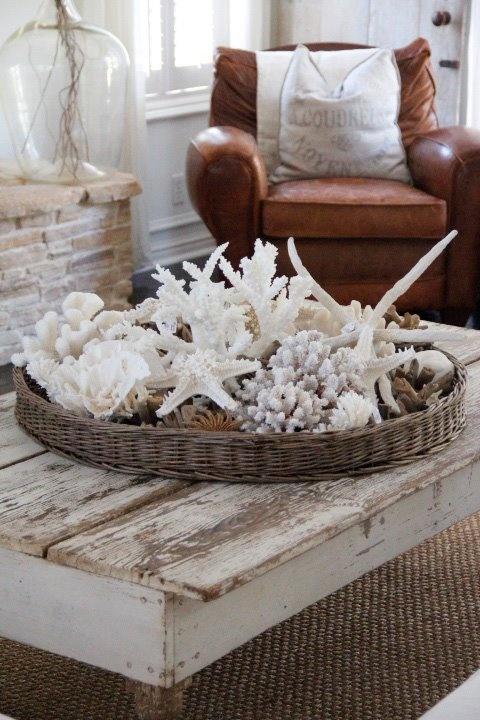 seashells displayed in a basket