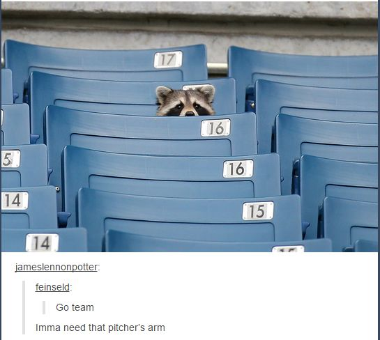 No matter what, any picture of a raccoon will always be a Marvel reference