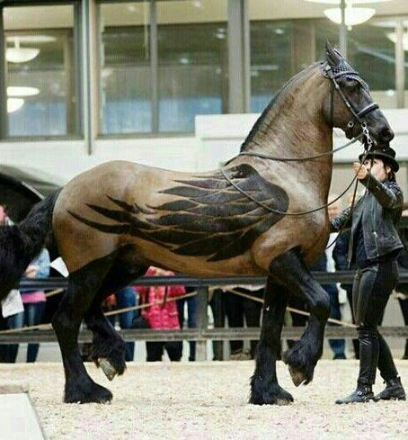 Friesian with a nice Pegasus clip job!