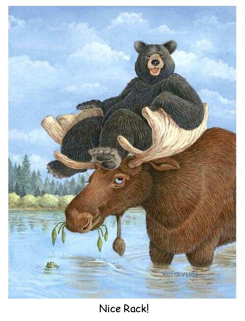 moose and bear | Moose and Bear Nice Rack!