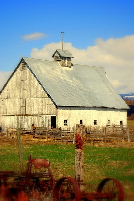 *White barns are pretty too. It is pretty! They were ... - photo#13
