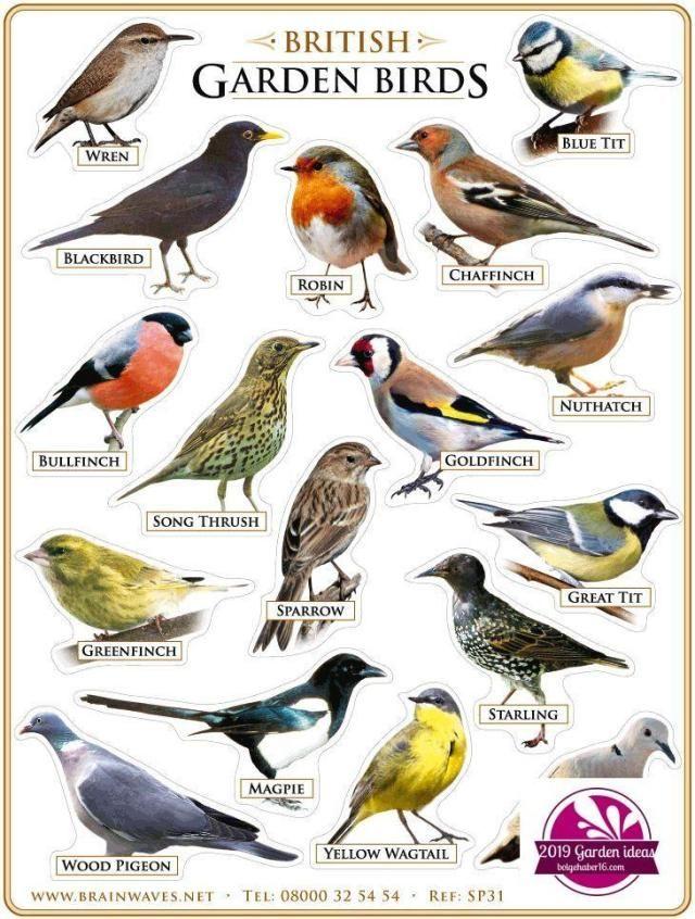 Bird Identification Mn