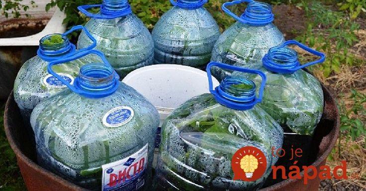Dopestujte si bohatú úrodu uhoriek v plastovej fľaši: Je to jednoduché a nepotrebujte ani záhradu!