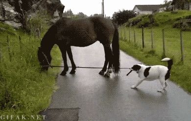 Here is a collection of eight awesome horse videos you have to see.