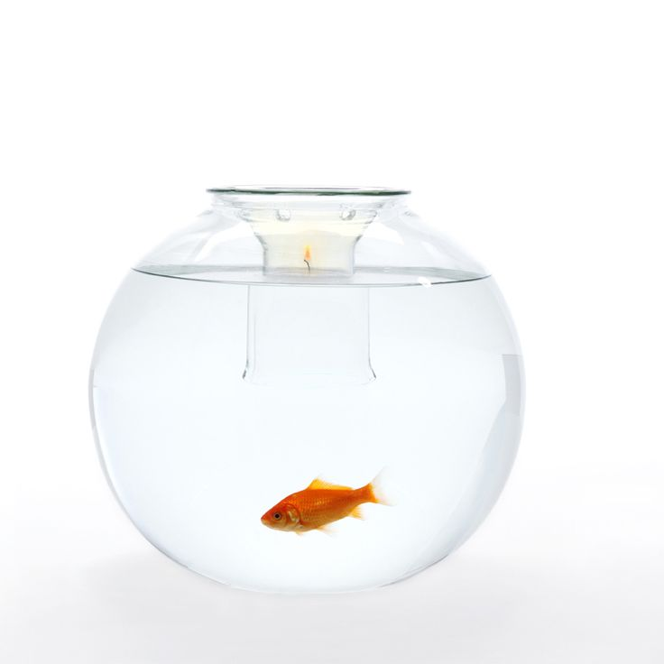 Coloring Page Fish Bowl Empty : 200 best aquariums fish bowls and tanks images on pinterest