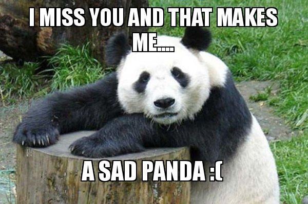 60 Cutest I Miss You Memes Of All Time Sayingimages Com I Miss You Cute Baby Panda Bears Panda Bear