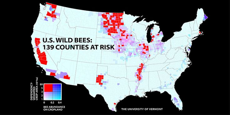 Wild Bee Decline Threatens U.S. Crop Production http://beforeitsnews.com/environment/2016/02/wild-bee-decline-threatens-u-s-crop-production-2547922.html