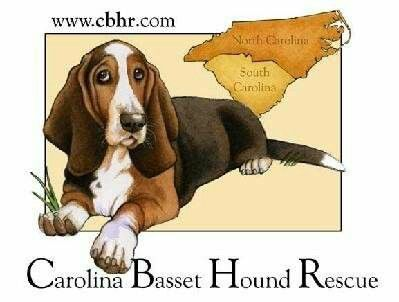 Rescuing, rehabilitating & rehoming basset hounds in North & South Carolina! Find out how you can help by visiting www.CBHR.com right now!