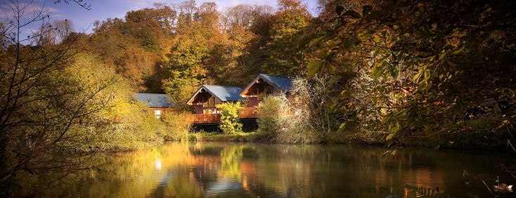 How stunning! Deerpark in Cornwall is magical at Autumn!  #leafwatching #ukbreak #forestretreat