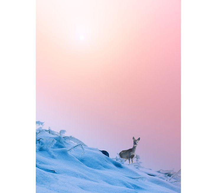 Warm Rose Quartz and Cooling Serenity colors. 5/6  #rosequartz #serenity