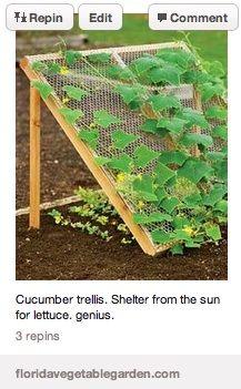 Cucumber/lettuce trellis