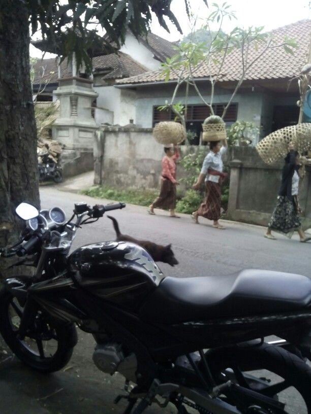 Balinese women 2015