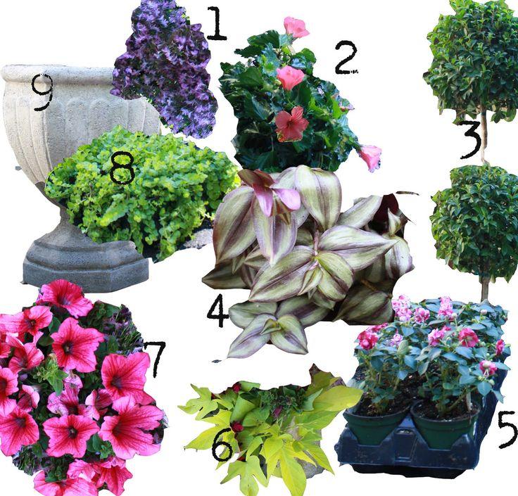 "Recipe: 1} 1- 10"" lavender lobelia  broken into 2 clusters 2} 3- 6"" tropical pink hibiscus  3} 1- 10"" eugenia topiary  4} 1-  11"" wanderin..."