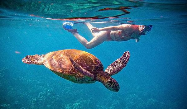 Snorkelling with turtles in Tenerife