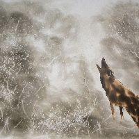 Wezwanie stada, 610 x 460, 2013 rok, dym