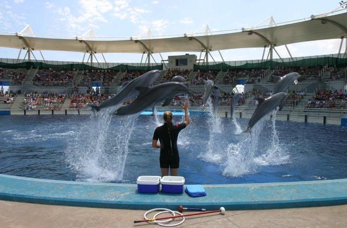 Exhibición en el delfinario