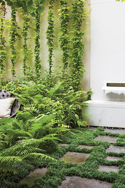 A carpet of green underfoot among the pavers, dense ferns reach out from their contained space, vertical growth to increase the garden's expanse - lush! Thomas Woltz