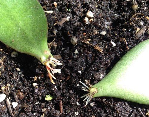 105 best houseplants terrariums succulents and more images on pinterest plants gardening. Black Bedroom Furniture Sets. Home Design Ideas