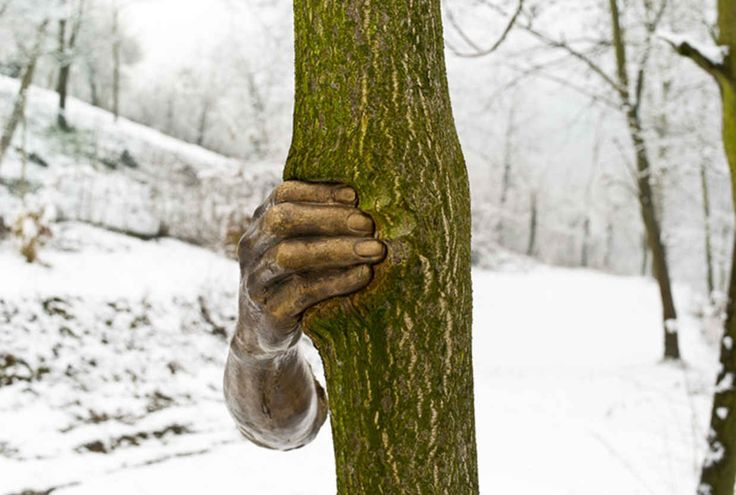 This Beautiful Bronze Sculpture Has Been Attached to a Tree Since 1968 - BlazePress