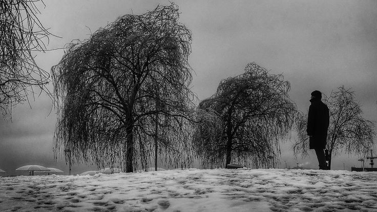 Man looking at Trees after the Freezing Rain (Toronto, Canada. Gustavo Thomas © 2013)