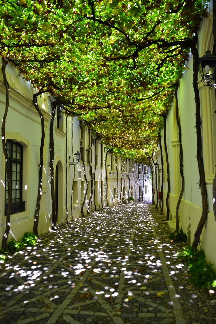 The trees offering a beautiful kind of ceiling to this street