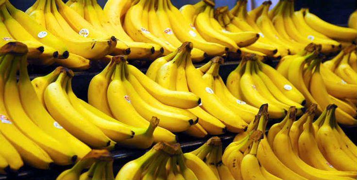 """De acuerdo con una investigación científica japonesa, el plátano completamente maduro con manchas oscuras sobre una piel muy amarilla produce una sustancia llamada """"factor de necrosis tumoral"""" que tiene la capacidad de combatir las células anormales.  Cuanto más maduro es el plátano, mejor es su capacidad anti cancerígena.  El plátano con manchas oscuras …"""