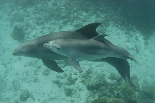 Baby Dolphin Pictures: Photos of Cute Baby, Young Sea Mammals | Teen.com