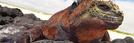 Los animales gigantes de Australia sucumbieron ante el cambio climático - Educa tu mundo
