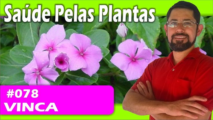 Saúde Pelas Plantas - Vinca [leucemia, diabetes, cicatrizante , seborreia]
