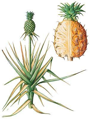 plante d 39 int rieur facile d 39 entretien recherche google plante pour les nuls pinterest. Black Bedroom Furniture Sets. Home Design Ideas