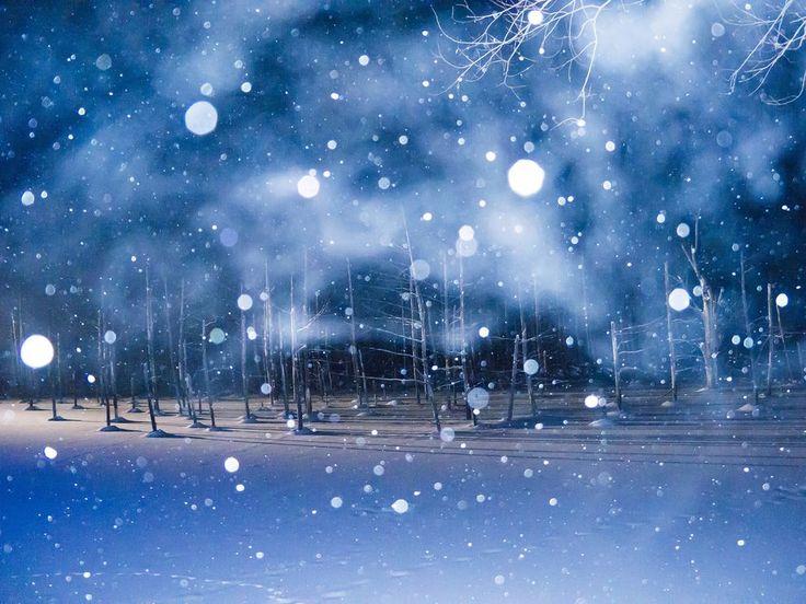 Picture of evening snowfall at the Blue Pond, Hokkaido, Japan.Photograph by Haruka Iwasaki