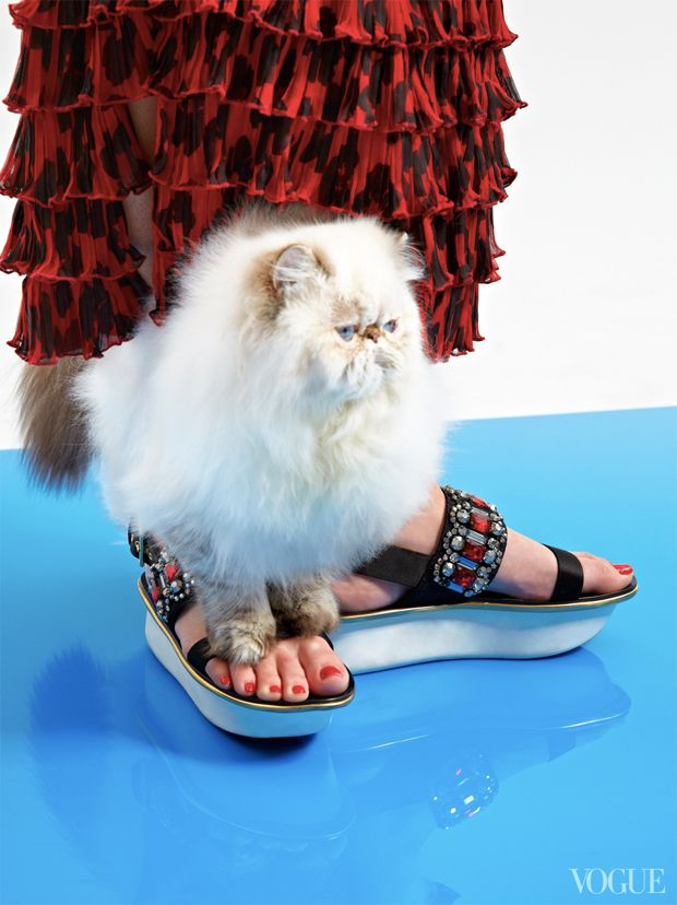 The Cat and the Flat: editorial da Vogue traz gatos e sapatos para todos os  gostos