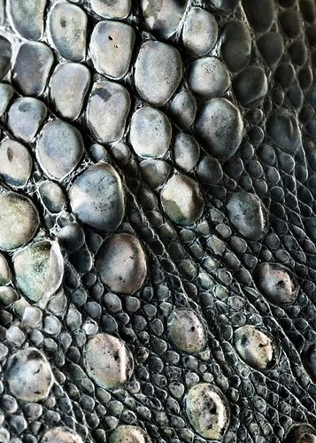 Nature's Artwork - Gecko Skin - natural texture, tonal colours and surface…